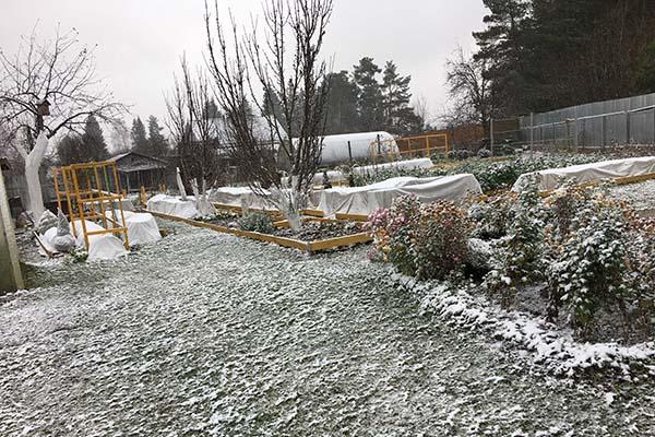 Подготовка сада к зиме